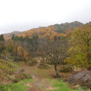 毎年恒例の伐採作業