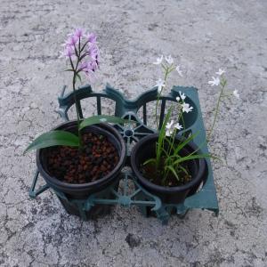 自然石の植木鉢