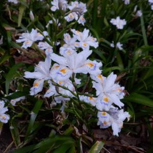 盃山の花々