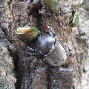 土曜日、日曜日まとめてブログ…昆虫採集