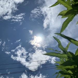 連休最終日は天日干しと充電