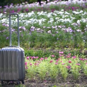 【東京~大阪】子連れ旅行で選ぶべきは飛行機?新幹線?料金や時間を徹底比較!【体験談あり】