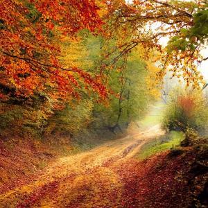 アトピーを治すための【秋の食事の取り方】