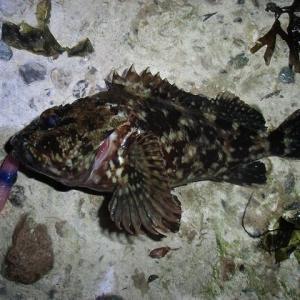 久しぶりの魚の引き