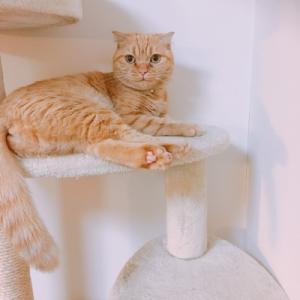うちのネコさんたち