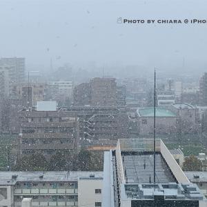 雪☃︎*.°