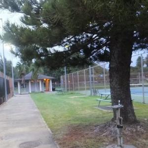 テニスコート中央