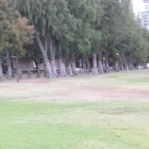 アメリカ杉並木