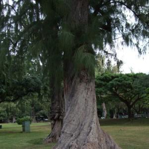 大きな樹木