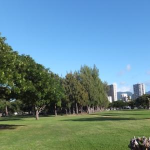 広い芝生エリア
