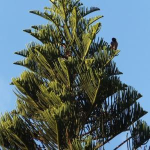 高い木のてっぺんに