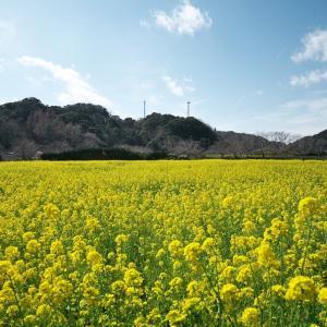 南伊豆の花と海と温泉を楽しむ伊豆急行線の旅