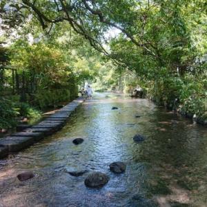 暑い夏にこんなコースはいかが? 三島駅近くの源兵衛川散策とお蕎麦のランチとマンホール