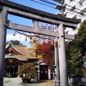 神奈川熊野神社のネコ様