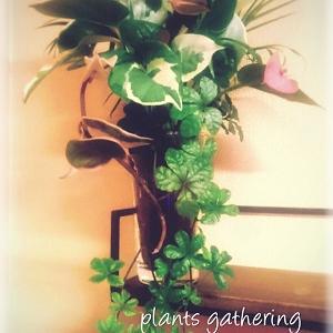 観葉植物で~プランツギャザリング♪