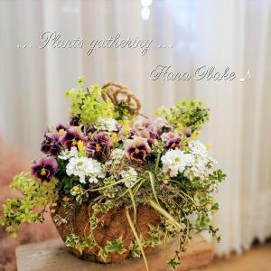 【クレマチス ピクシー 】花かごギャザリング♪… (*˘︶˘*).。.:*♡