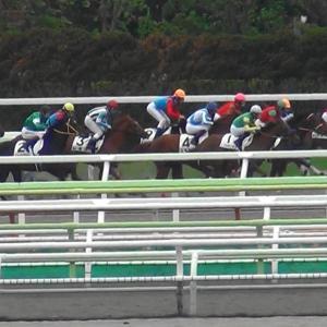ダイヤモンドS・京都牝馬Sの予想の様なモノ