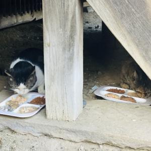 中山骨董市と私よりご飯が豪華な寺のネコ