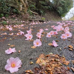 山奥で花が見ていた。