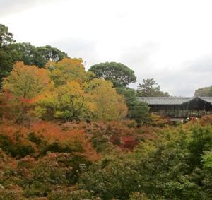 すでに、京都の紅葉は観光客のモノになっちまった件(-_-;)