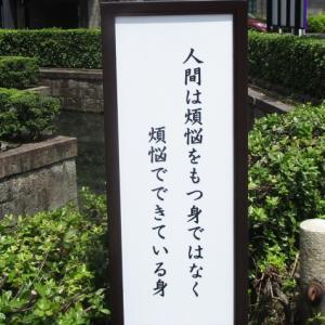 ヨドバシとら~めんと・・・d(^O^)b