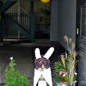「ウィズアウト コロナ」の明日を目指して(* ̄0 ̄)/ オゥッ!!