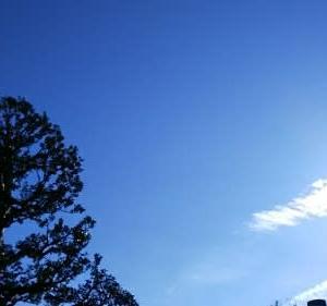 高尾山を登ります
