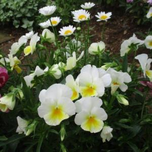 2020年5月18日 今朝の富士森公園の花と緑と空模様