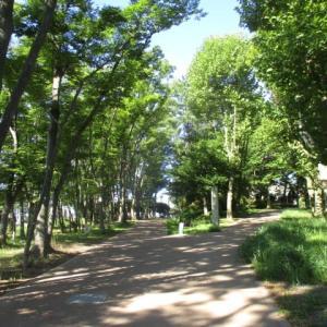 猛暑日には富士森公園の木陰の映像いかがですか?(2020年8月11日)