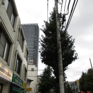 終日こんな天気みたいですね。な八王子駅南口周辺(2020年9月20日)