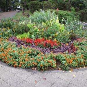 雨で花壇の花が色鮮かな今朝の富士森公園(2020年9月25日)