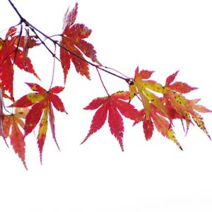 隠れた紅葉の名所のタカドヤ高原湿地