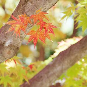 白鳥庭園の色々な種類の紅葉