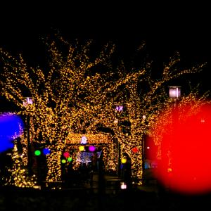 デンパークのウィンターフェスティバルを彩るイルミネーション