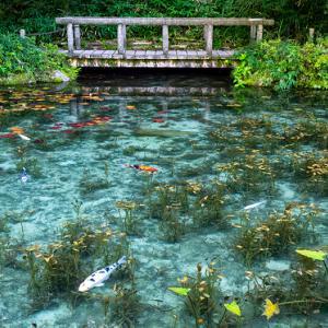 澄んだ青緑色が美しいモネの池