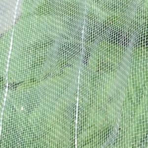 菜園 9月下旬 栽培記録