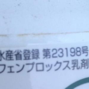 菜園 10月上旬 白菜薬剤
