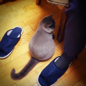 猫中心の生活