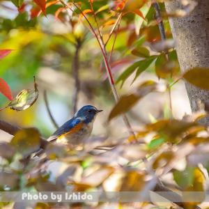 青い鳥が見られた