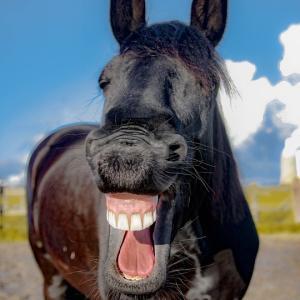 【お知らせ】気軽にお笑い!ポピンズショートコメディ5本立て@西白井複合センターまつり