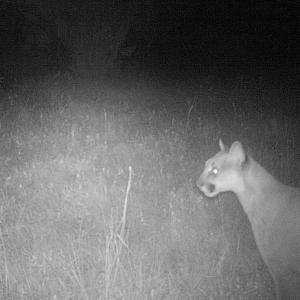 ライオンがいる森に住んでいる