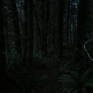 夕暮れの森の中でおとぎ話は始まる