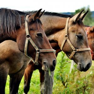 [回顧録] 30年前のカナダ、ワーホリ。乗馬クラブの仕事で知り合った人と馬
