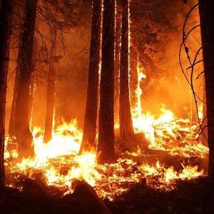 温暖化の影響をもろに受け始めた!オレゴンの山火事