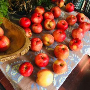 秋分の日 [Fall Equinox] オレゴンの森にも秋のサイン