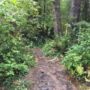 [キノコ狩り] オレゴン海岸おすすめハイキング3コース