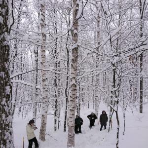 2021冬の白樺造材