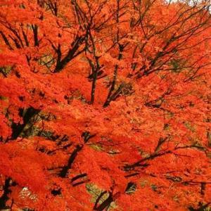 北島三郎の「魂」 菅総理のような政治家どもは「誠実で嘘をつかない日本人のこころ」をスッカリ忘れている