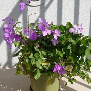 100均で揃えた花々 第5月