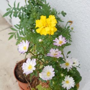 百均で揃えた花々